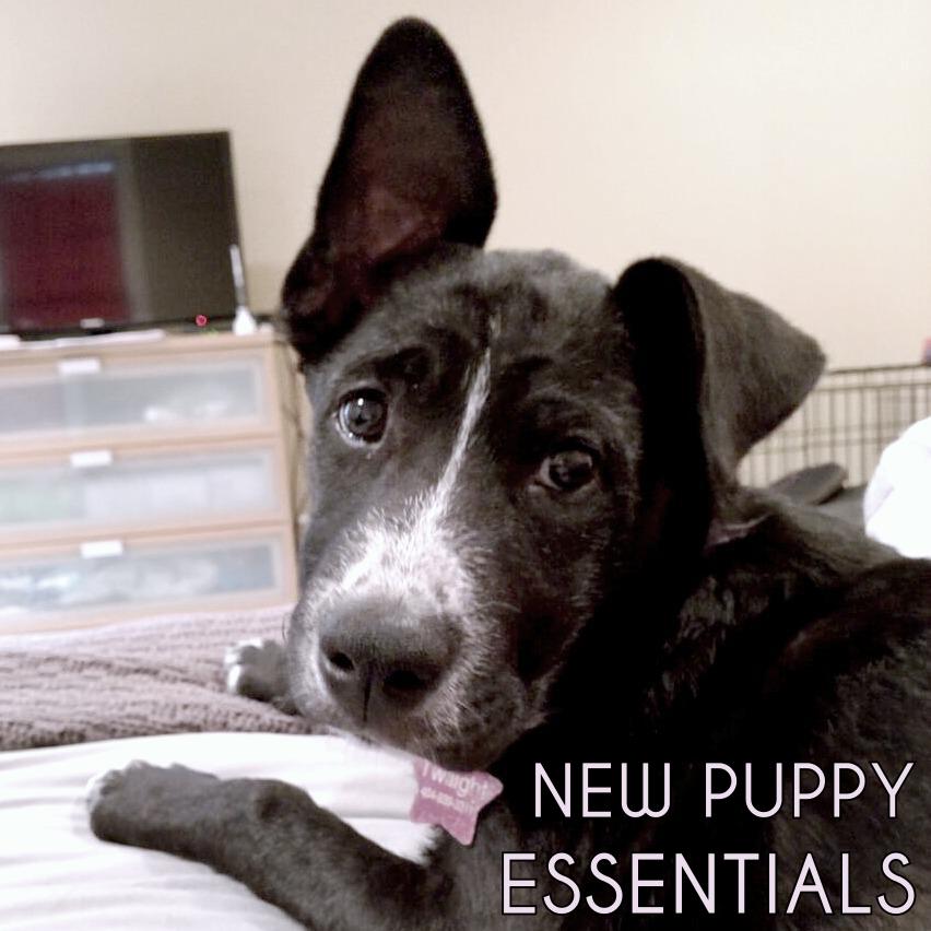 new-puppy-essentials
